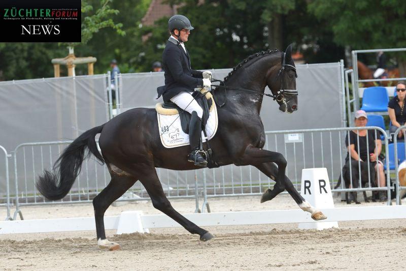 Die höchste Dressurendnote erhielt St. Athletique von St Schufro, im Bild während des Hannoveraner Reitpferdechampionat in Verden 2021